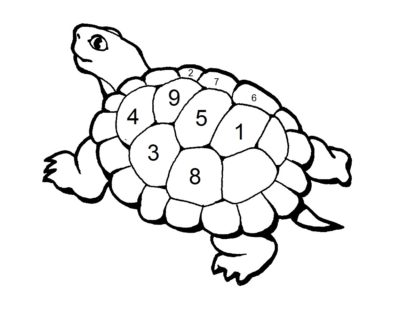 tortue-dorigine
